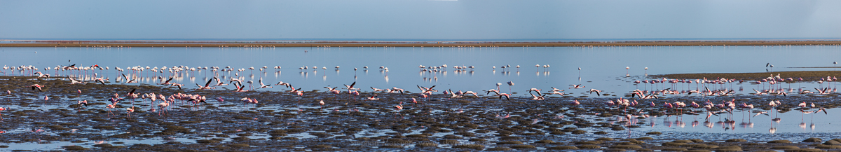 _MG_4622-4628_Flamingos_6QF_400mm_16grd_noHDR_Panorama