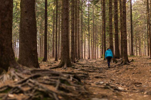 Hochwald am Fuß des Kleis