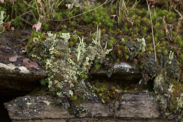 Landschaften en miniature